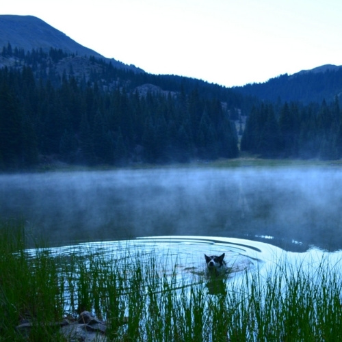 A dog swimming in Heart Lake, New Mexico